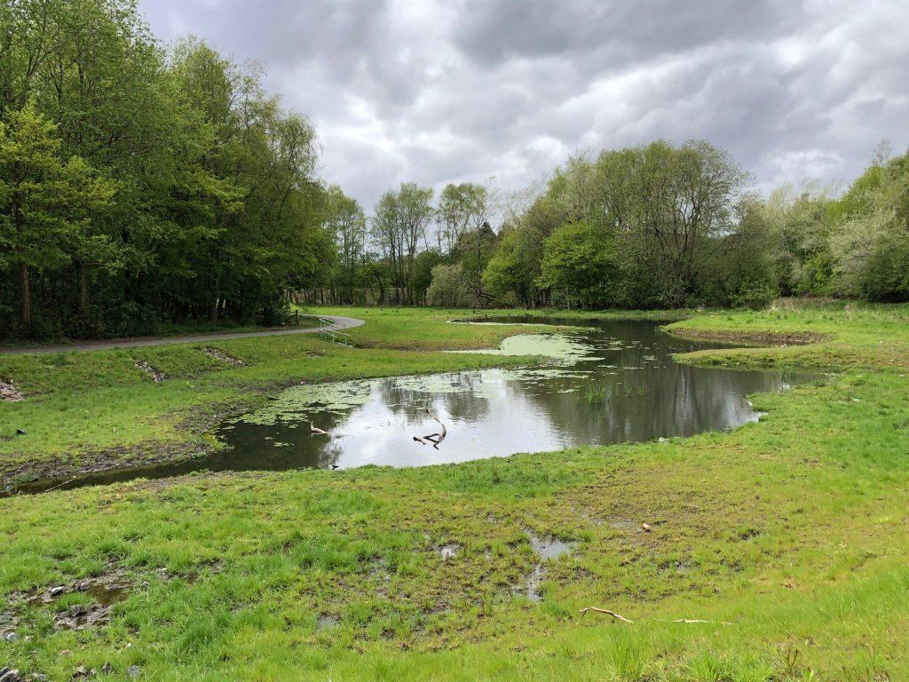 Braes Park biodiversity scrape
